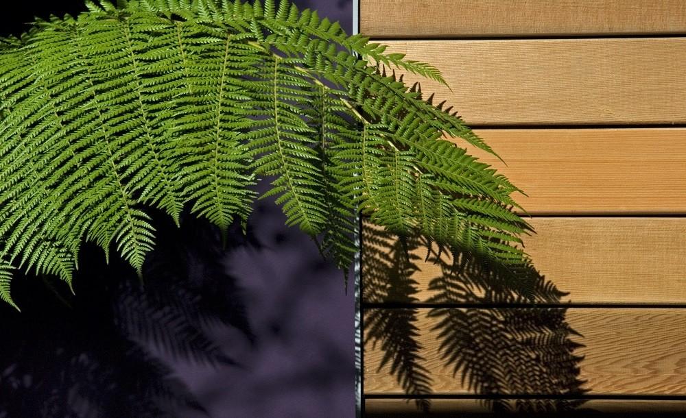 Western red cedar cladding for garden rooms